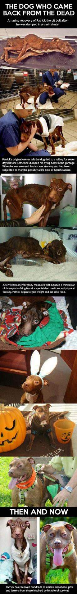 Poor baby!!: Animal Rights, Animal Cruelty, Pitbull, Amazing Dogs, Animal Abuse, Animal Stories, Dogs ️, Animal Rescues, Beautiful Dogs