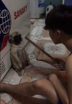 Prosecute Phy Nguyen For Hitting and Abusing His Dog! | PetitionHub.org-- Please sign and share this petition.: Dogs Cats, Guy 20, Dogs Behavior, Guy Hitting, Head Thinks