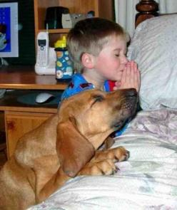 Puppies pray too!  This picture makes me think of our dog, Sadie who does everything my little sister does and is so 'human' that she has to be tucked into bed before going to sleep at night.  Lol.: Prayer, Animals, Dogs, Sweet, So Cute, Pet, Funn