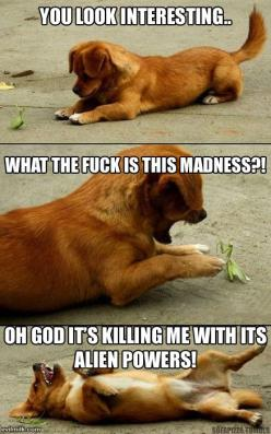 Puppy vs. Mantis: Animals, Dogs, Stuff, Puppys, Funnies, Things, Funny Animal, Praying Mantis