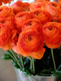 R a n u n c u l u s: Plants, Beautiful Flowers, Orange Rose, Orange Flowers, Floral Arrangements, Orange Ranunculus, Flowers, Garden