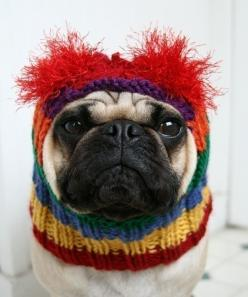rainbow bright dog hat. I couldn't do this to Miles but I think it's adorable! : Hats, Pug Hat, Animals, Dogs, Rainbow Bright, Pugs, Friend, The Originals