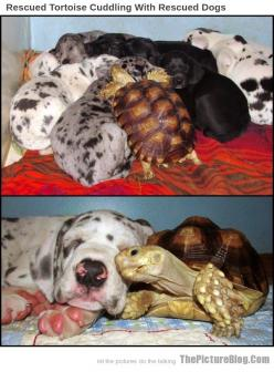 Rescued Tortoise Cuddling With Rescued Dogs: Dogs Alexis, Dogs Awwwww, Awwwwwww Nimals, Turtles Tortoises, Mother In Law, Be Real, Bad Day, Ahhh Turtles, Animals Don T