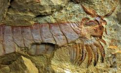 Scientists have unearthed extraordinarily preserved fossils of a 520-million-year-old sea creature,one of the earliest animal fossils ever found-arthropod.: Earliest Animal, Preserved Fossils, Oldest Animal, Animal Fossils, 500 Million Year Old Sea, Feedi