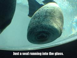 Seal smoosh: Seals, Giggle, Animals, Glasses, Funny Stuff, Funnies, Humor