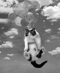 "* * SECOND THOUGHTS: "" Dem 'asstards! Air borne ands dey fergotz de parachute - or mayhaps dey didn'ts ferget; der justs bein' cruel fools."": Cats, Kitty Cat, Animals, Pet, Funny, Kitties, Balloons, Flying Cat, Photo"