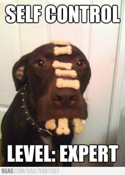 Self Control Expert: Animals, Dogs, Pet, Funny Stuff, Self Control, Selfcontrol, Funnie