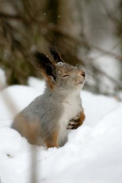 smell the breeze!  (unrelated to topic, but thought it would make you smile  :-): Animals, Winter, Squirrels, Nature, Snow, Creatures, Bunnies, Photo