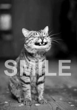 Smile, it's a cute cat! And if you really want to smile visit flirtydivatees.com: Animals Smiling, Animal Quotes, Funny Cats, Quotes Cats, Cute Cat, Funny Smiles, Kitty, Cats Quotes, Smiling Cats