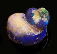 snail  {opal] / Mineral Friends <3: Favorite Opals, Fossils Minerals Archaeology, Fossils Rocks Geology, Art Inspiration, Earth Opals, Fossil Replaced, Opalized Shell, Opal Fossils, Shells Patterns