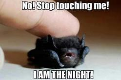 So cute... Once saved a cute little one who was injured on the sidewalk when everyone else just walked by. Be kinder to these little guys!!: Animals, Stuff, Bats, Funny, Night, Already, I Am