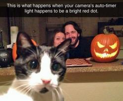 So funny!: Cats, Photobomb, Animals, Camera, Funny, Red Dots, Cat Lady