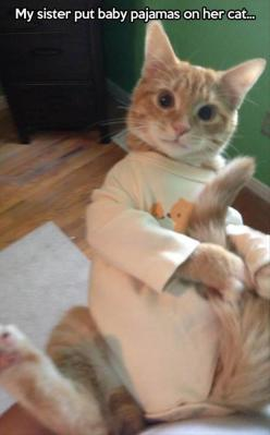 so mean and yet so funny: Sister, Cats, Animals, Funny Cat, Funny Pictures, Crazy Cat, Kitty, Cat Lady, Baby Pajamas