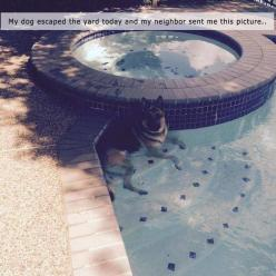 So sweet. Hey animals r sometimes smarter than humans☺: Animals, Dogs, Funny Pictures, Pool, Pet, German Shepherds, Puppy, Photo