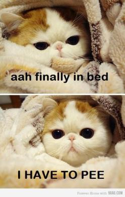 so true...: Cats, Animals, Bed, My Life, So True, Funny Stuff, Funnie