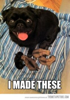 Somebody is a proud mama!: Animals, Dogs, Stuff, Pets, Pugs, Puppy, Baby, Things, Funny Animal