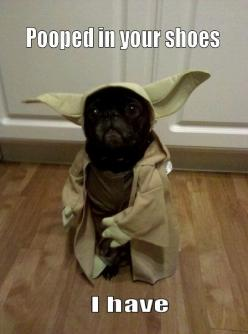someday I will dress my dog as Yoda. but... he WILL NOT poop in my shoes. ever.: Yoda Pug, Animals, Dogs, Star Wars, Funny Stuff, Pugs, Funnie