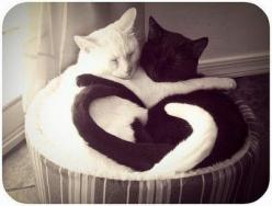 sometimes I'm jealous that they get to sleep the majority of their life away.: Cats, Kitty Cat, Animals, Sweet, Heart, Cat Love, Black White, Yin And Yang, Yin Yang