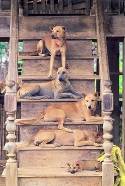 "stairs  ~ turned rest area. Looks like a Family reunion is going to be happening so everyone is out waiting to ""meet and Greet"" <3 <3: Dogs Cats, Doorstep Dogs, Dog Draped Stairs, Baby Dogs, Carolina Dogs, Photo, Animal, Doggy Stairs"