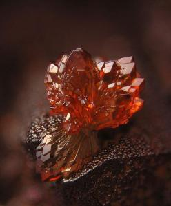 Strengite: Crystals, Gemstones, Iron Phosphate, Nature, Rocks Minerals, Beautiful, Posts, Fossils