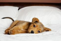 sweetness...: Animals, Puppies, Sweet, Dogs, Bed, Pets, Puppys, Adorable, Friend