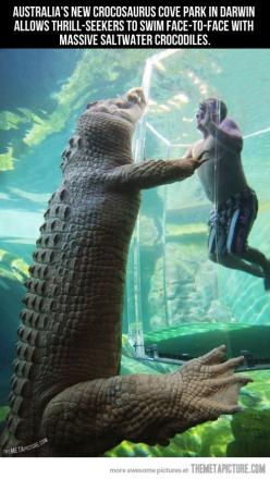 Swimming face-to-face with massive crocodiles, this might be the scariest thing i've seen. I like crocs but they scare me more than sharks. I would probably do this... but it would be way scary!: Bucket List, Bucketlist, Animals, Saltwater Crocodile,