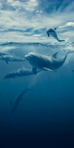 Swimming with dolphins.. Go... See it all! Live your life! Abundance in every area of your life! Get more at http://abundanceleagueinternational.com  - Stop the Dolphin and Orca Slaughter NOW: Dolphins 3, Dolphins Ocean, Dolphine Dolphins, Dolphins Whales