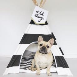 Teepee life... #pipolli: Teepee Life, French Bulldogs, Spectacular Petacular