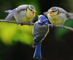 The Argument!!!! Two Bird Fussing on the other Bird! Don't you wonder what this heated discussion is all about? I know I do.: Animals, Nature, Funny, Beautiful Birds, Angry Birds, Photo