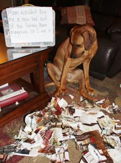The Best of Dog Shaming - Part 19 | Little White Lion: Dog Shaming, Animal Humor, Ashamed Dogs, Bad Dog, Bed, Animal Shaming, Dog Cat Shaming, Barn Catalog, Pet Shaming