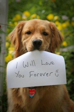 The Best Thing About a Dog... ♥: Animals, Dogs, Golden Retrievers, Pet, Love You Forever, Puppy, Friend