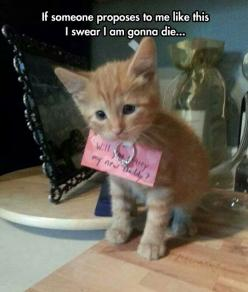 The cutest proposal in the history of marriage (my Step Brother proposed to his wife this way! ~Cindy M.): Cats, Proposal Idea, Animals, Wedding Ideas, Proposals, Kittens, Kitty