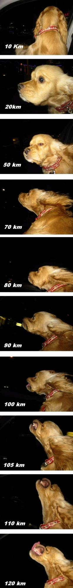 The dog speedometer. Try to look at this and not laugh: Giggle, Animals, Dogs, Stuff, Window, Funnies, So Funny