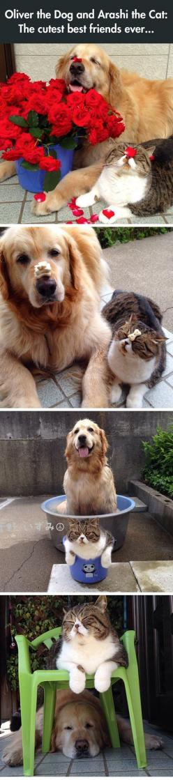 The Most Adorable Best Friends Ever: Funny Animals, Best Friends, Dogs And Cats, Dog Cat, Pet, Animal Friends, Cats And Dogs, Cats Dogs, Golden Retriever