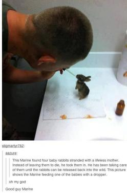 The picture of the nicest marine in existence. | 35 Pictures That Prove The World Isn't Such A Bad Place: Marine, Picture, Babies, Animals, Humanity Restored, Mother, Baby Bunnies, Baby Rabbits