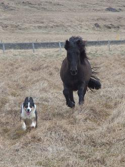 The race is on. http://www.annabelchaffer.com/categories/Equestrian-Gifts/: Flickr, Http Baby Dogs 15 Blogspot Com, Animals Friendship, Pet, Corgi, Jacie Dogs Animals, Horses Dogs, Horses And Dogs, Photo