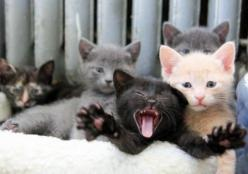 there's always one... kittens: Cats, Animals, Pet, Crazy Cat, Kittens, Photo, Kitty, Black Cat