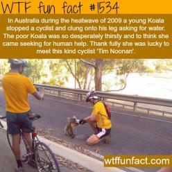 thirsty Koala stops an Australian cyclist.  wtf fun facts: Facts About Animals, Wtf Facts, Funfacts D, Faith, Weird Facts, Fun Facts, Know Funfacts, Wtf Fun, Random Facts
