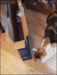 This cat who tried to...not sure what it was trying to do exactly. But it failed. | 24 Cats Who Tried So Hard But Failed Epically.: Cats, Fit, Animals, Funny Cat, Boxes, Funny Gifs, Fat Cat, Animal Gif, Funny Animal
