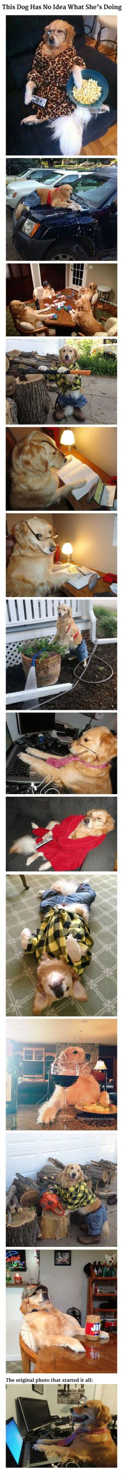 "This Dog Has No Idea What She's Doing. Remember that funny picture of a beautiful golden retriever seated at a computer with the caption ""I have no idea what I'm doing?"" Her owner has come forward with more hilarious photos of her dog doing human things a"