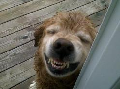 This dog looks so faded & happy.  I'm actually kinda jealous...: Doggie, Face, Smiling Animals, Dogs, Funny Pictures, Funny Stuff, Funnies, Smile