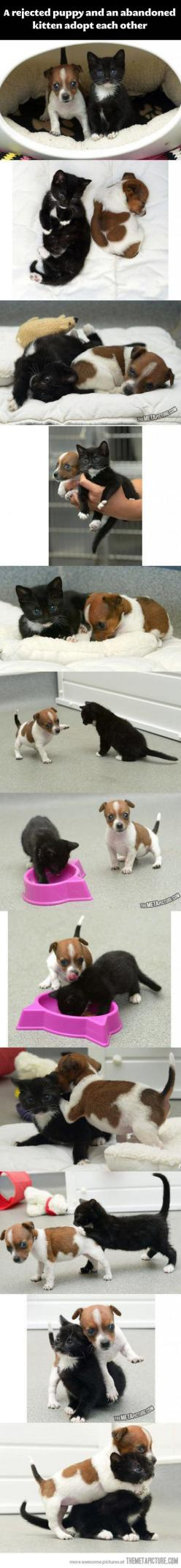 This is adorable...: Cuteness Overload, Best Friends, Kitten Adopt, Pet, Baby Animal, Puppy, Cats Dogs, Kitty, Cats Kittens