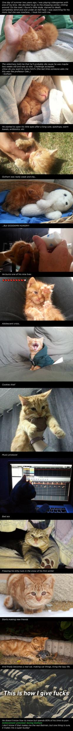 This is adorable: Kitten, Named Gotham, Normal Life, Awesome Story, Saving Gotham, Animal, Cat Lady