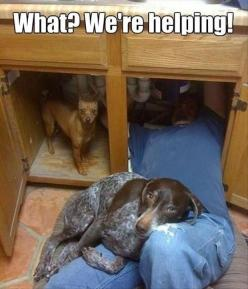 this is rocco every time he watches daddy work on his truck. hey dad, whatcha doing down there? why you on ground?: We Re Helping, Animals, Cat, Dogs, Pet, Funny Animal, Friend