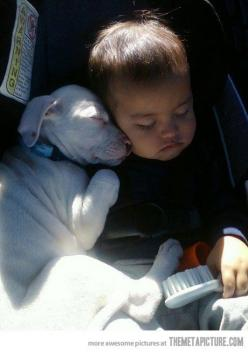 This just melts my heart!: Animals, Sweet, Dogs, Pet, Pitbull, Pit Bull, Puppy, Baby, Friend