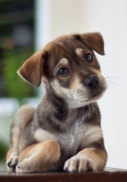 This lil' pup is amazing! I really like mongrels/mutts... Though I am an animal lover so I don't favor them or pedigree and I don't favor pedigree over them!