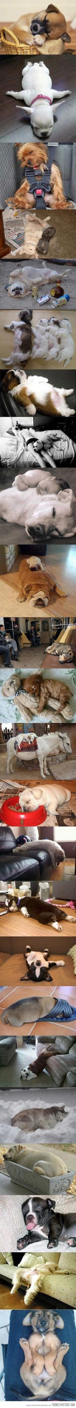 This makes me smile.  Forever.: Doggie, Sleeping Dogs, Animals, Pet, Sleepy Puppies, Puppys, Baby, Sleep Attack, Sleeping Puppies
