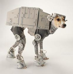 This makes me smile.  I wonder if it would be easy to make a similar costume for a smaller Jack Russell type dog?  Hmmmm....: Dogs, Halloween Costumes, Both, Pet, Star Wars, Dog Costumes, Starwars, Animal