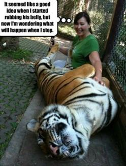 This may have been a mistake. . .: Funny Animals, Good Ideas, Big Cats, Funny Pics, Pet, Funny Picture, Funny Stuff, Funnies, Tigers