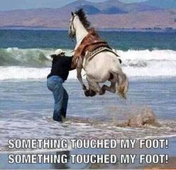 This reminded me of myself..................I hate it when things touch my feet in water......: Animals, Horses, Funny Stuff, Funnies, Humor, Things, Funny Animal, The Beach